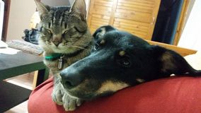 Γάτα και σκυλί Στοκ Φωτογραφία