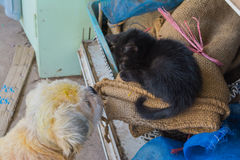 Γάτα και σκυλί Στοκ φωτογραφία με δικαίωμα ελεύθερης χρήσης