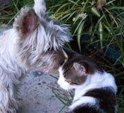 Γάτα και σκυλί Στοκ εικόνα με δικαίωμα ελεύθερης χρήσης