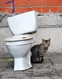 Γάτα και τουαλέτα στοκ φωτογραφίες