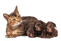 Γάτα και το κουτάβι του σκυλακιού σαλονιού Στοκ Φωτογραφία