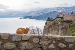 Γάτα και το μοναστήρι Meteora Στοκ Εικόνα