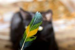 Γάτα και φτερό Στοκ εικόνα με δικαίωμα ελεύθερης χρήσης