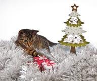 Γάτα και χριστουγεννιάτικο δέντρο, Χριστούγεννα, παρόν Στοκ Εικόνα