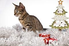 Γάτα και χριστουγεννιάτικο δέντρο, Χριστούγεννα, παρόν Στοκ εικόνα με δικαίωμα ελεύθερης χρήσης