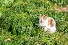 Γάτα και χλόη Στοκ Εικόνες