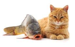 γάτα και ψάρια στοκ εικόνα με δικαίωμα ελεύθερης χρήσης