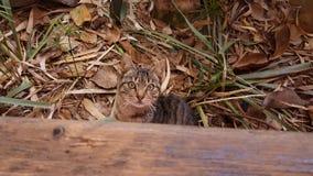 γάτα καλή στοκ φωτογραφίες