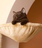 γάτα καλαθιών αστεία Στοκ Εικόνες