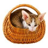 γάτα καλαθιών λίγα Στοκ Φωτογραφία