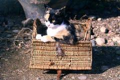 γάτα καλαθιών Στοκ Εικόνες