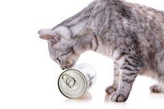 Γάτα κασσίτερου Στοκ εικόνα με δικαίωμα ελεύθερης χρήσης