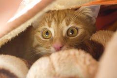 Γάτα κατάπληξης Στοκ φωτογραφία με δικαίωμα ελεύθερης χρήσης