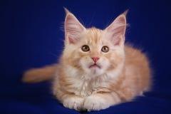 Γάτα κατοικίδιων ζώων γατακιών Στοκ φωτογραφία με δικαίωμα ελεύθερης χρήσης