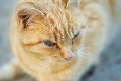 Γάτα κατοικίδιων ζώων Στοκ Εικόνα