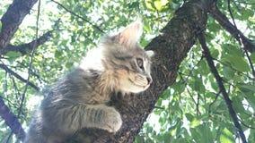 γάτα καλή Στοκ φωτογραφίες με δικαίωμα ελεύθερης χρήσης