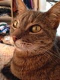 γάτα καλή Στοκ Εικόνες