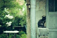 Γάτα κοντά στο σπίτι με το ιώδες δέντρο Στοκ εικόνα με δικαίωμα ελεύθερης χρήσης