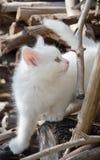 Γάτα κουταβιών Στοκ φωτογραφία με δικαίωμα ελεύθερης χρήσης