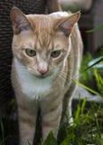 Γάτα κρέμας Στοκ εικόνα με δικαίωμα ελεύθερης χρήσης