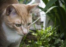 Γάτα κρέμας Στοκ φωτογραφία με δικαίωμα ελεύθερης χρήσης