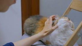 Γάτα κτυπήματος γυναικών απόθεμα βίντεο