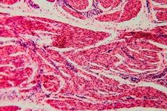 Γάτα κύστεων κυττάρων υποβάθρου φύσης στοκ εικόνα