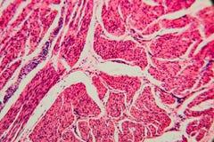 Γάτα κύστεων κυττάρων υποβάθρου φύσης στοκ εικόνες