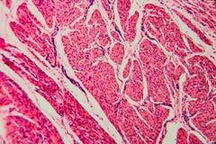 Γάτα κύστεων κυττάρων υποβάθρου φύσης στοκ φωτογραφία