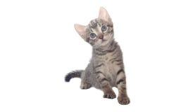 γάτα λίγα γλυκά στοκ φωτογραφία