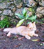 γάτα λίγα Στοκ Εικόνες