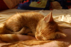 γάτα λίγα στοκ φωτογραφία