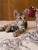 γάτα λίγα Στοκ εικόνα με δικαίωμα ελεύθερης χρήσης