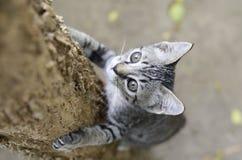 γάτα λίγο ταϊλανδικό δέντρο στοκ εικόνα