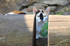 Γάτα μεταξύ των κούτσουρων Στοκ Εικόνα