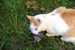 Γάτα με κυνηγημένος κάτω από το πουλί στοκ εικόνες