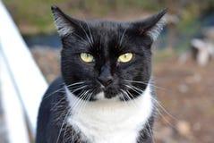 Γάτα με μια τοποθέτηση Στοκ φωτογραφία με δικαίωμα ελεύθερης χρήσης