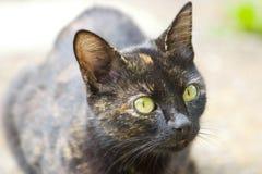 γάτα με πρωταγωνιστή Στοκ Εικόνα