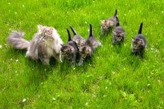Γάτα με τα γατάκια σε έναν πράσινο χορτοτάπητα Στοκ Φωτογραφία