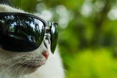 Γάτα με τα γυαλιά Στοκ εικόνα με δικαίωμα ελεύθερης χρήσης