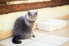 Γάτα με τα ευρέα ανοιγμένα πορτοκαλιά μάτια στοκ εικόνες με δικαίωμα ελεύθερης χρήσης