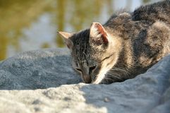 γάτα με τα διαφορετικά μάτια Στοκ Εικόνες