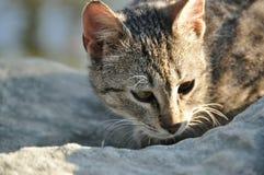 γάτα με τα διαφορετικά μάτια Στοκ εικόνα με δικαίωμα ελεύθερης χρήσης