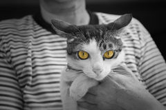 Γάτα με τα κίτρινα μάτια, γραπτά σώμα και υπόβαθρο Στοκ φωτογραφία με δικαίωμα ελεύθερης χρήσης