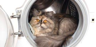 Γάτα με τα κίτρινα μάτια στο πλυντήριο Στοκ εικόνα με δικαίωμα ελεύθερης χρήσης