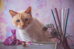 Γάτα με τα κρύσταλλα εποξικής ρητίνης και το πλαστό λουλούδι και peacock feathe Στοκ Φωτογραφίες