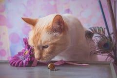 Γάτα με τα κρύσταλλα εποξικής ρητίνης και το πλαστό λουλούδι και peacock feathe Στοκ Εικόνες