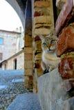 Γάτα με τα μπλε μάτια, που κάθονται στα βήματα ενός αρχαίου φρουρίου Στοκ φωτογραφίες με δικαίωμα ελεύθερης χρήσης
