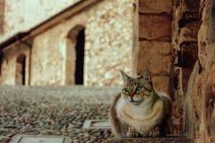 Γάτα με τα μπλε μάτια, που κάθονται στα βήματα ενός αρχαίου φρουρίου Castle Rocca Di Angera Στοκ Εικόνες