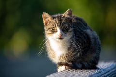 Γάτα με τα πράσινα μάτια στοκ εικόνες με δικαίωμα ελεύθερης χρήσης